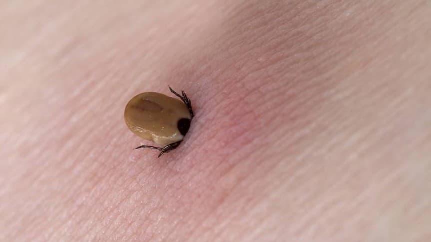 Lyme-kór szűrés