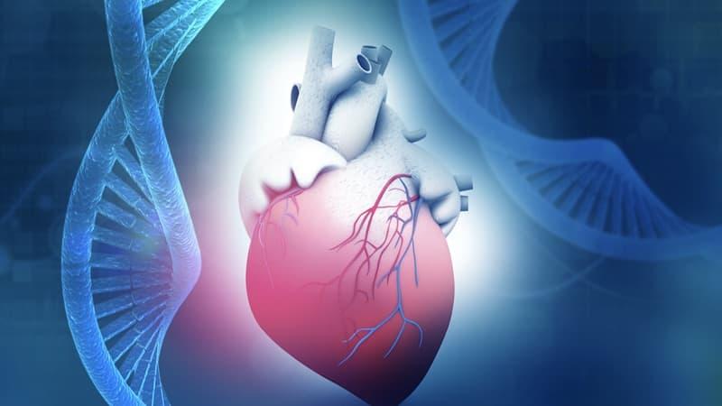 Kardiológia genetika
